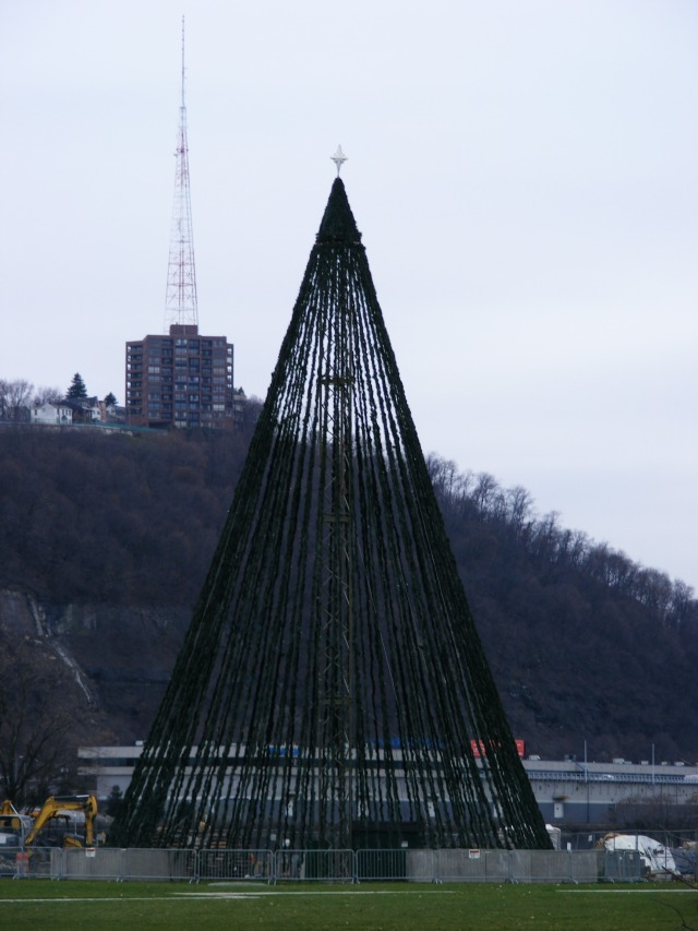 Point State Park Tree