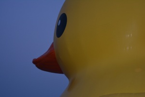 See Duck