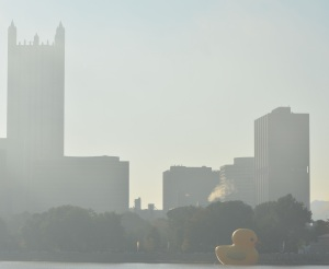 Duck in Pittsburgh