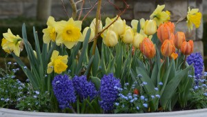 spring flowers sm